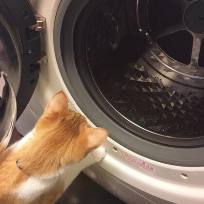 洗濯槽 ゴムパッキン 掃除