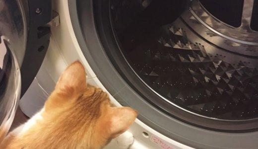 【ドラム式洗濯機のゴムパッキンにカビ】その取り方と今後の予防。