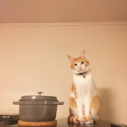 ネコ 冷蔵庫の上