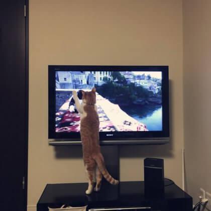 岩合さんを見る猫