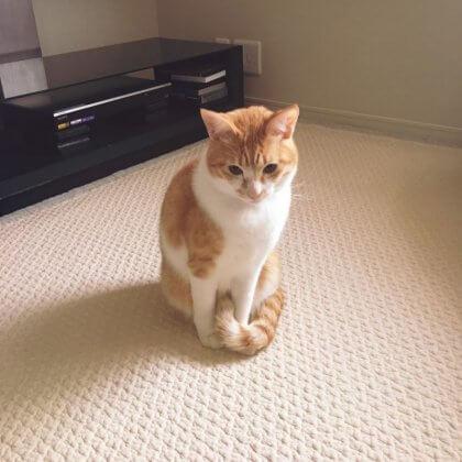 イブル 猫