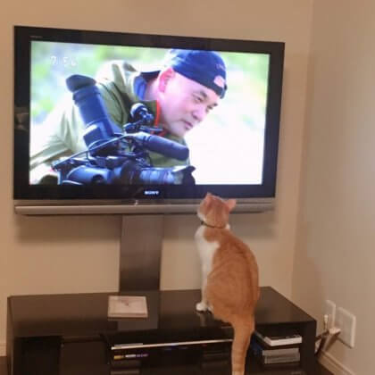 岩合さん見る猫