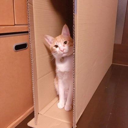 身軽に生きる 猫